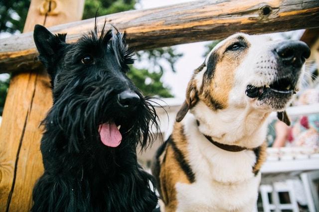 Dieta barf para perros y gatos