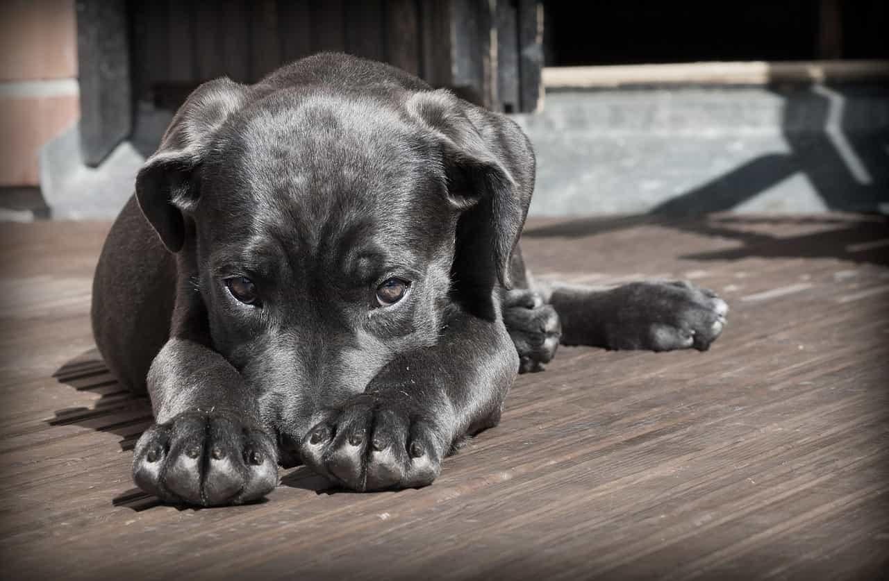 alimento para perros barf
